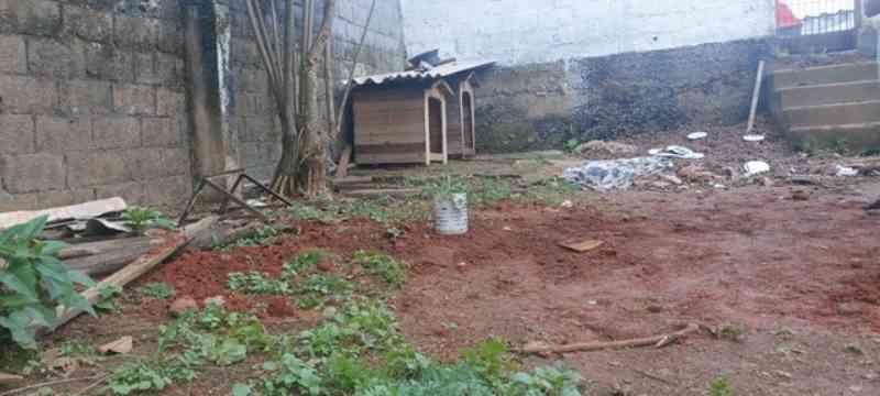 Mulheres denunciam a morte de 14 cães em Poá, SP; animais teriam sido envenenados