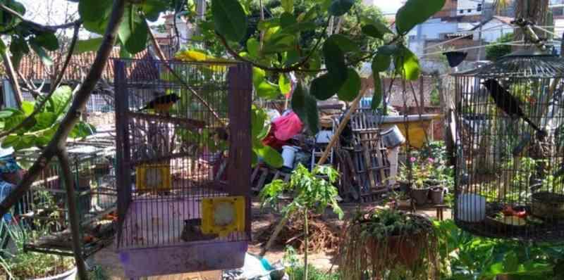 Homem é multado em R$ 7 mil por manter aves silvestres em cativeiro no Jardim Everest, em Presidente Prudente, SP