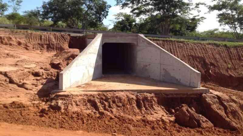 Parceria: animais encontrados em rodovias serão levados ao Bosque Fabio Barreto, em Ribeirão Preto, SP