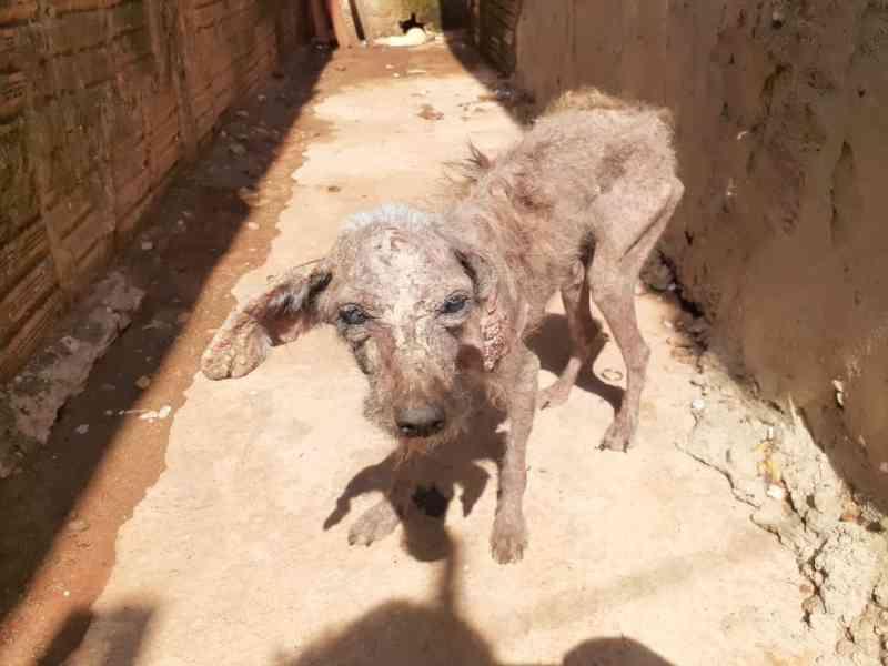 Seis cães com sinais de maus-tratos são resgatados em chácara de São José do Rio Preto, SP