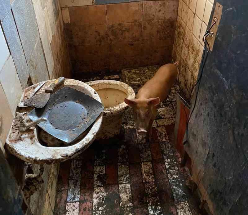Polícia prende homem que mantinha porco trancado em banheiro e cachorro morto na casa