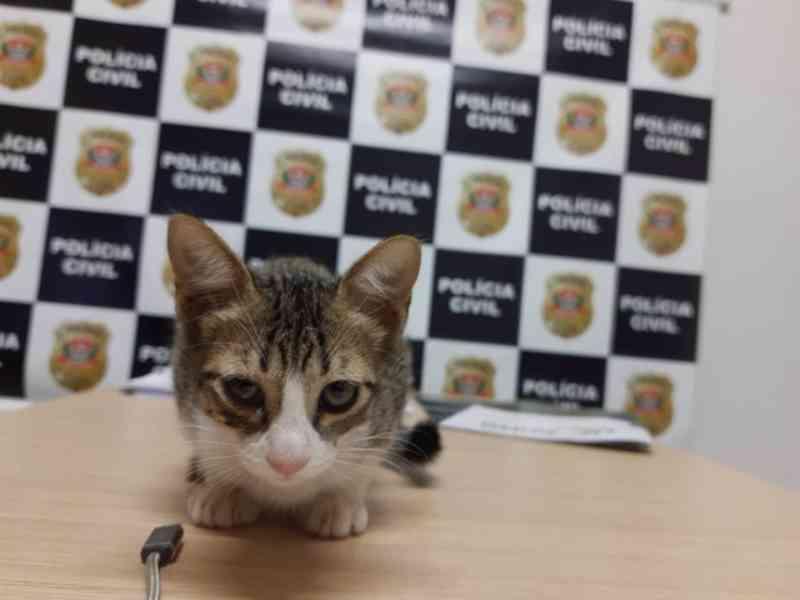 Homem é preso por abandonar filhote de gato após ser flagrado por PMs com caixa de papelão em São José do Rio Preto, SP
