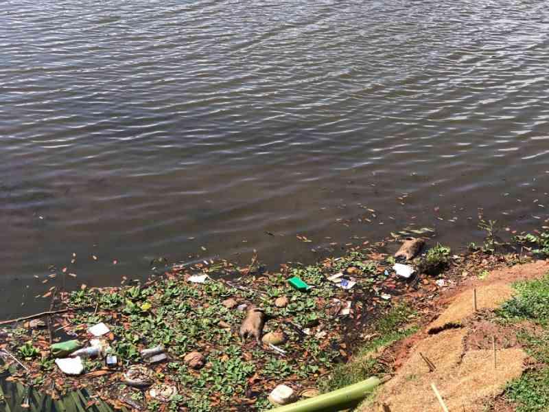 Capivaras são encontradas mortas na Represa Municipal de São José do Rio Preto, SP