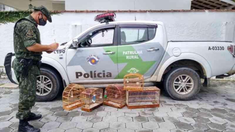 Aves recém-capturadas são resgatadas em São Sebastião, SP
