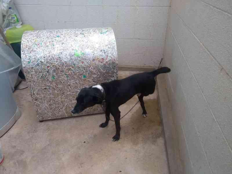 Cachorro em situação de maus-tratos é resgatado e tutora é autuada em Sorocaba, SP