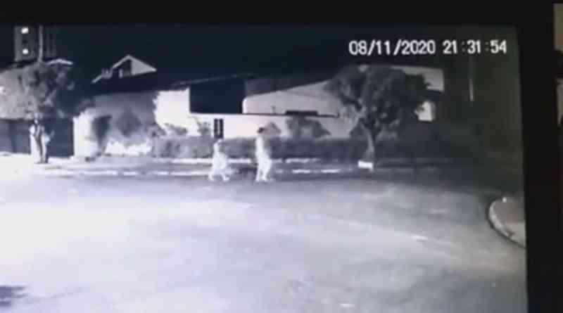 Câmeras de monitoramento registram mulheres abandonando cadela amarrada em árvore no litoral de SP