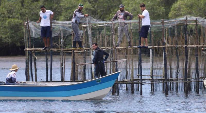 Resgate de animal contou com a ajuda de pescadores em Cananeia, SP — Foto: Divulgação/IPeC