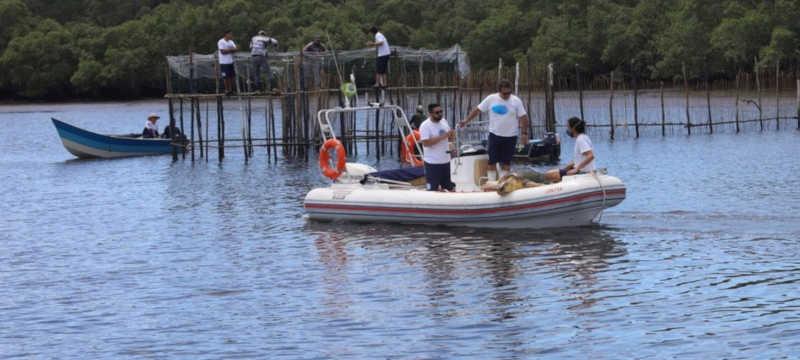 Tartaruga foi encaminhada para Centro Reabilitação e Despetrolização de Animais Marinhos — Foto: Divulgação/IPeC