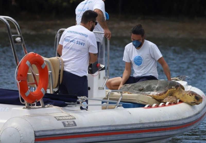 Tartaruga-cabeçuda é resgatada após ficar dentro de cerco de pesca no litoral de SP