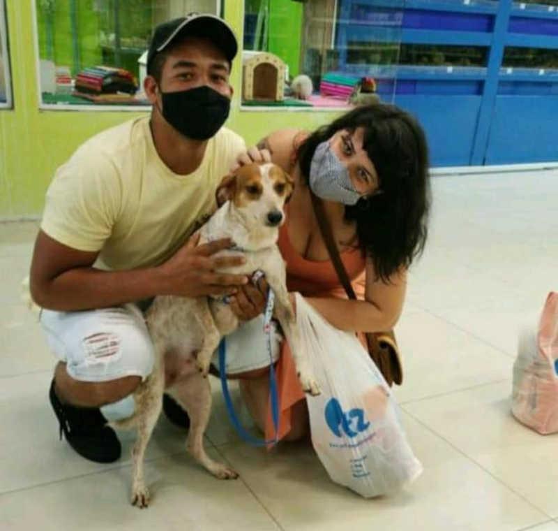 Cachorra que superou maus-tratos foge 3 dias após adoção no litoral de SP: 'Angustiante'