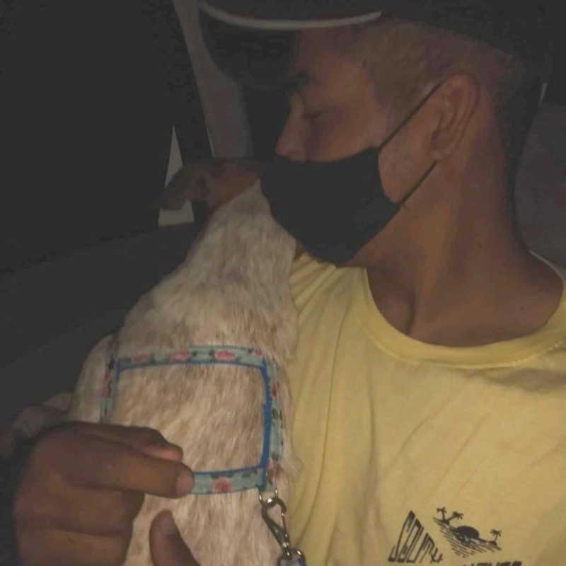 Cachorra roeu a coleira e desapareceu em Guarujá, SP — Foto: Arquivo Pessoal