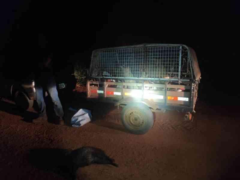 Homens são flagrados com nove cachorros usados para caça e um animal silvestre abatido