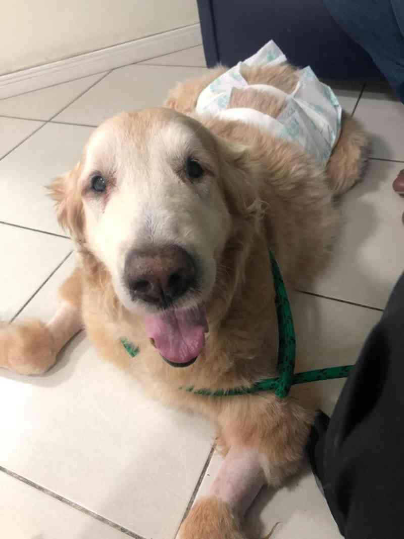 Cão fica em estado grave após comer calcinhas jogadas em praia no litoral de SP