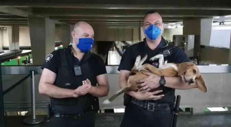 Metrô de SP paralisa atividades em trecho da Linha 1-Azul para salvar cachorra presa nos trilhos