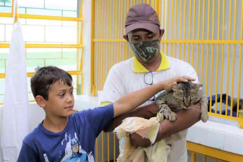Centro de Castração realiza cerca de 50 cirurgias gratuitas no primeiro mês em Araguaína, TO
