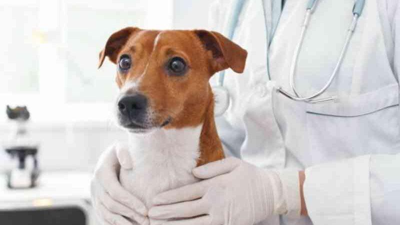 Estudante de medicina veterinária é denunciado por atender como profissional formado