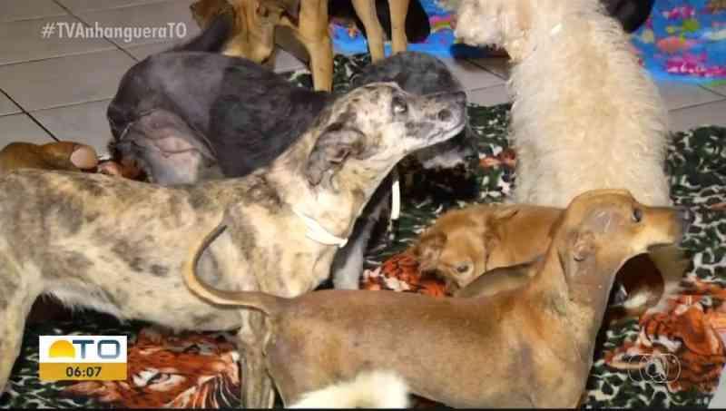 ONG que cuida de animais vítimas de maus-tratos está sendo despejada de casa em Palmas, TO