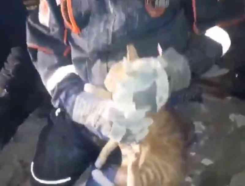 Gato é resgatado com vida dos escombros após terremoto na Turquia