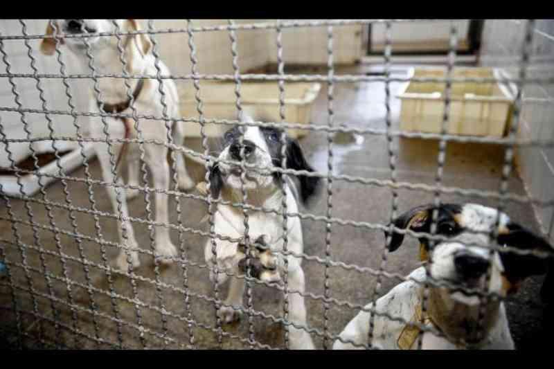 Projeto de Lei quer punir no 'bolso' quem for flagrado maltratando animais