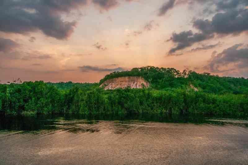 Savanização de florestas tropicais impactará mais de 200 espécies animais