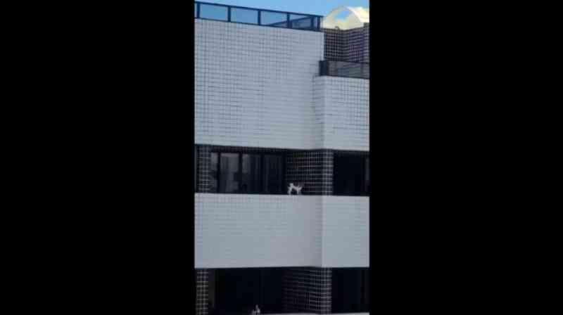 Moradores flagram cachorro caminhando na varanda do 10º andar de prédio em Maceió, AL