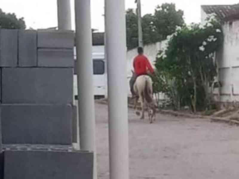 Polícia procura homem que arrastou cadela por mais de 1 km em Paulo Jacinto, AL