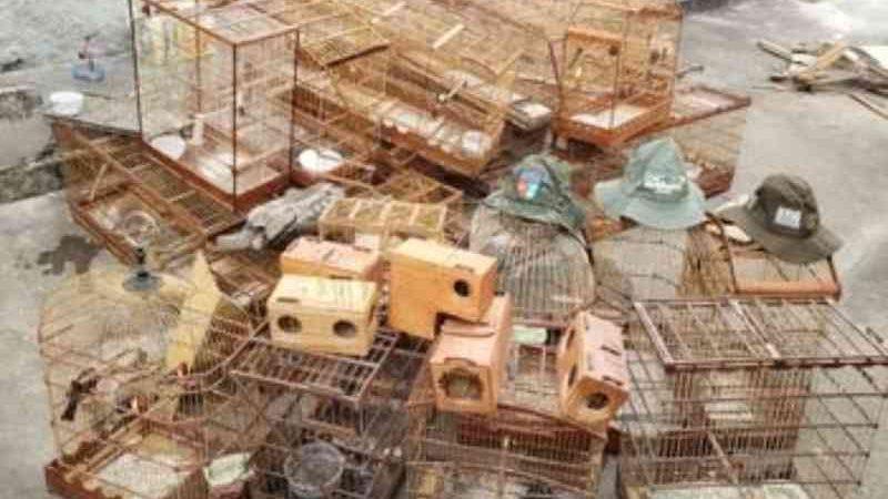 Operação Curupira: BPA apreende 335 animais silvestres e dez armas de fogo na Zona da Mata alagoana