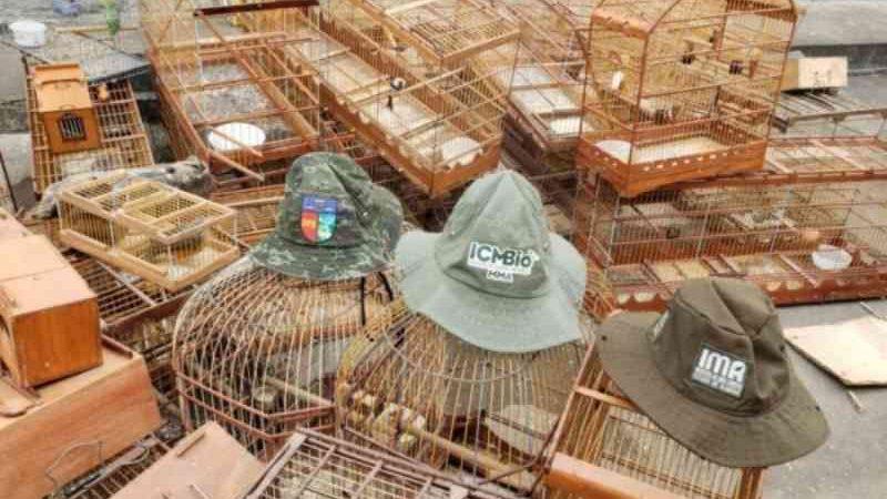 Operações ambientais resgatam 850 animais silvestres e prendem três caçadores em Alagoas
