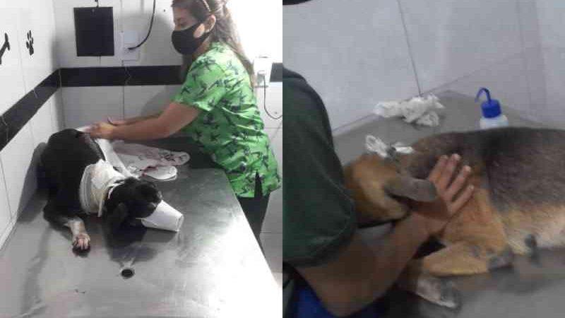 Suspeito de esfaquear gatos e cachorros é preso em Manaus, AM