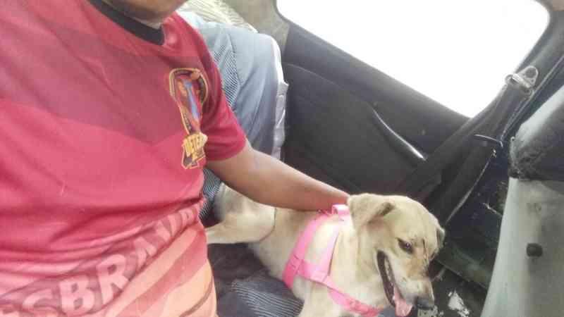 Armado com terçado, homem ataca e fere cadela de vizinho em Manaus, AM
