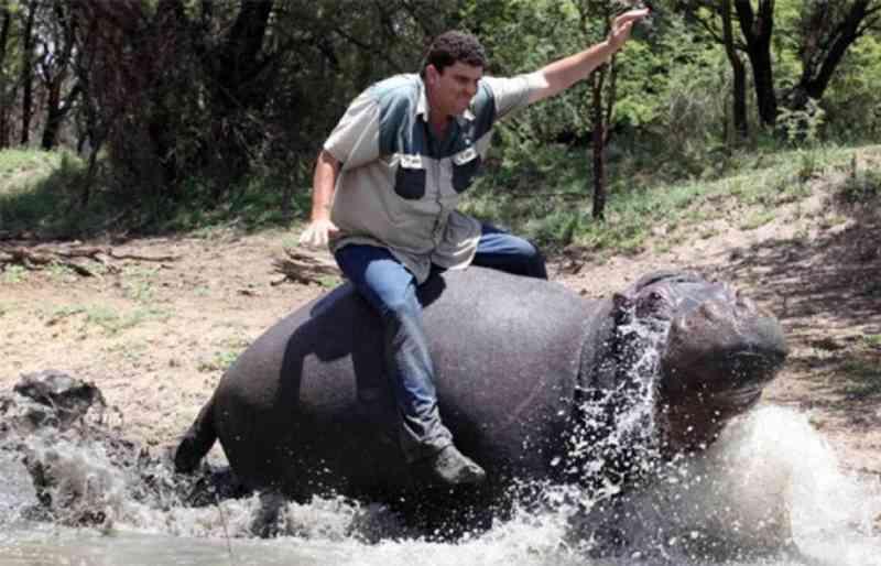 Hipopótamo 'de estimação' mata o seu tutor na África do Sul