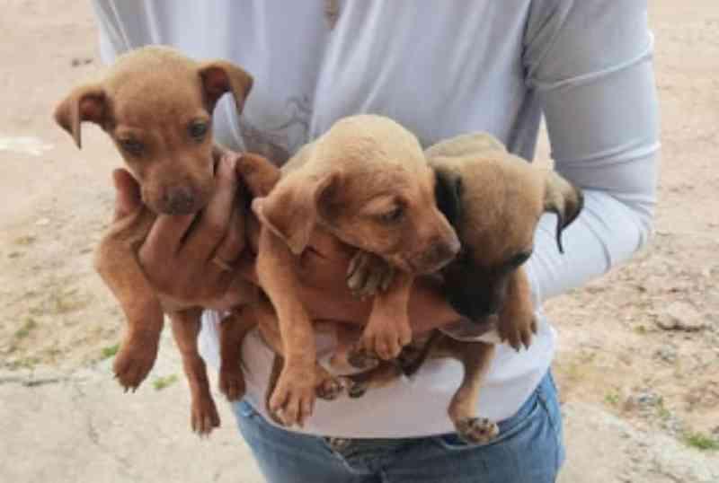 Políciais e Apase resgatam cães vítimas de maus-tratos na Chapada Diamantina, BA