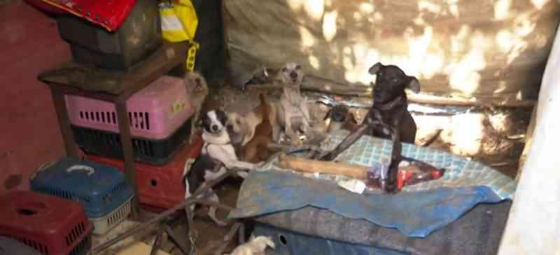 MP de Ilhéus (BA) recomenda que animais que eram mantidos presos e acorrentados sejam devolvidos à tutora