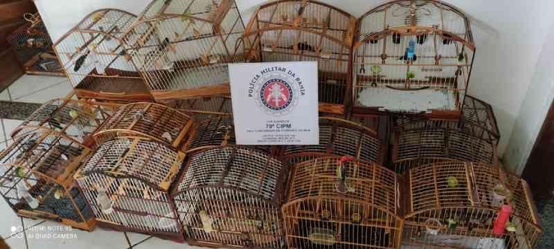 Trio é preso suspeito de manter quase 100 pássaros silvestres em cativeiro ilegal na Bahia
