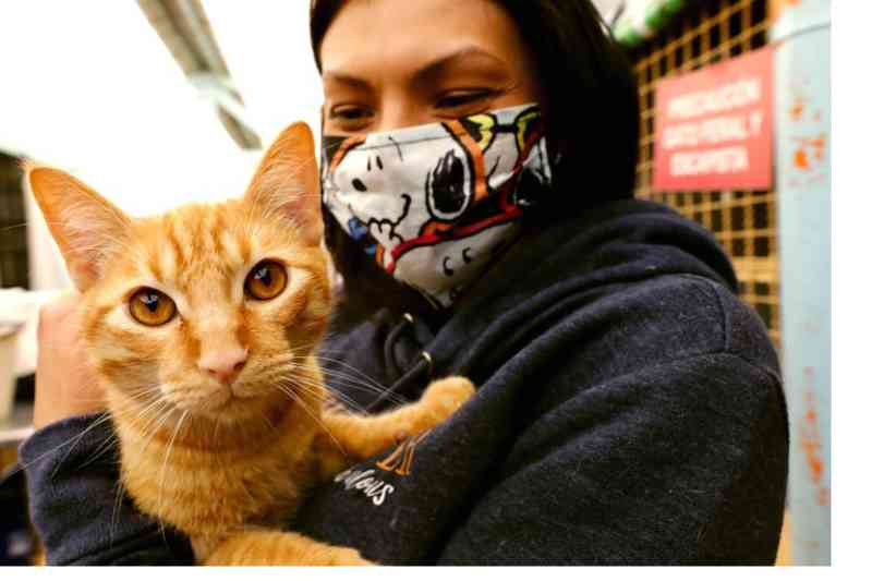 Bogotá lança o site do primeiro observatório de proteção e bem-estar animal