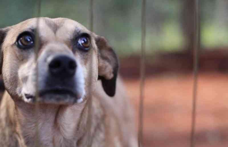 Cerca de 10% dos cães sem lar no mundo vivem pelas ruas do Brasil