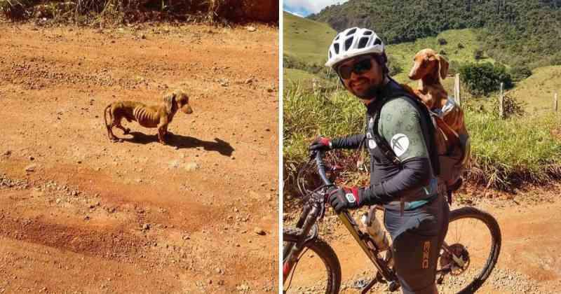 Ciclista encontra cachorro desnutrido na estrada e resolve adotá-lo. Agora, eles viajam juntos!