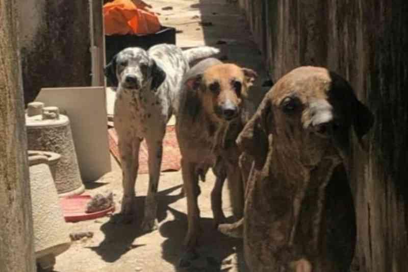 Fortaleza: mãe e filha são autuadas por maus-tratos contra 10 cães na Aldeota com base na Lei Sansão