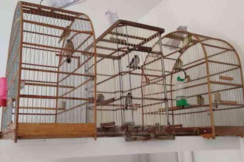 Polícia Civil apreende 11 pássaros silvestres e cinco gatos em Fortaleza e Horizonte, CE