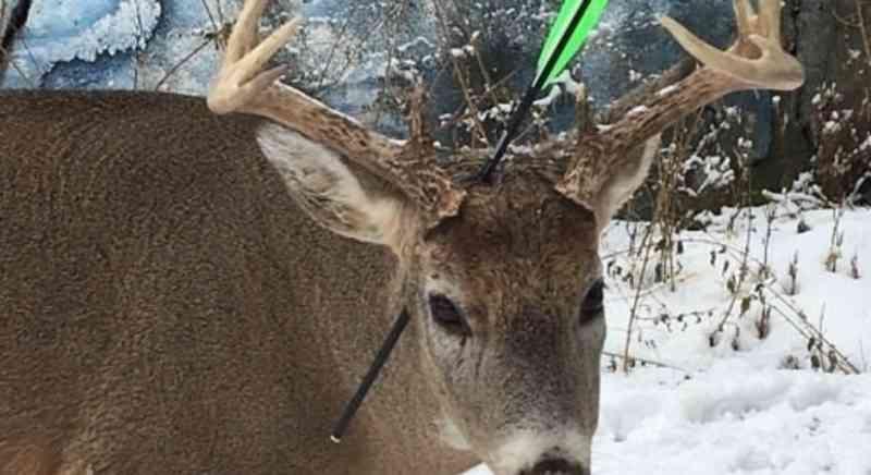 Cervo com flecha atravessada no crânio visita cidade todo Natal