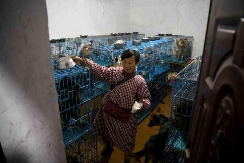 Aposentada mora com mais de 1,3 mil cachorros resgatados na China