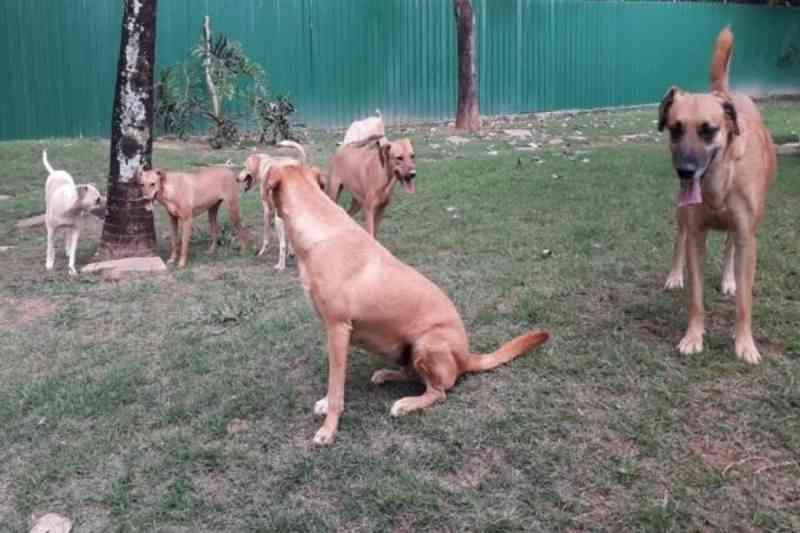Justiça do DF manda fechar abrigo e 26 cães resgatados serão desalojados