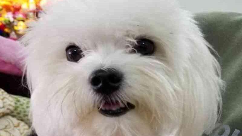 Necrópsia aponta que cachorro morto em pet shop no DF foi mordido por cão maior