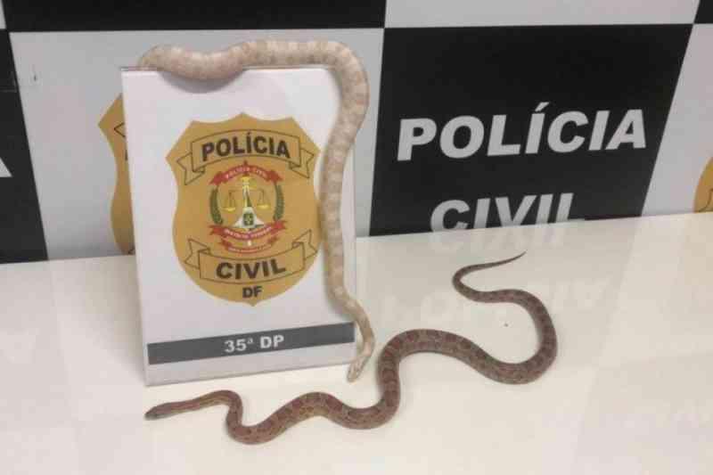 Universitária é presa por manter cobras norte-americanas em cativeiro no DF