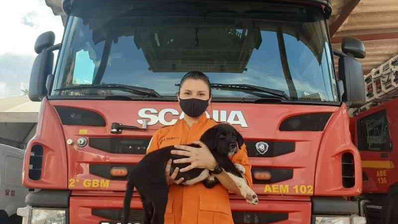 Após 'vaquinha' de bombeiros, cão atropelado no DF se recupera de cirurgia