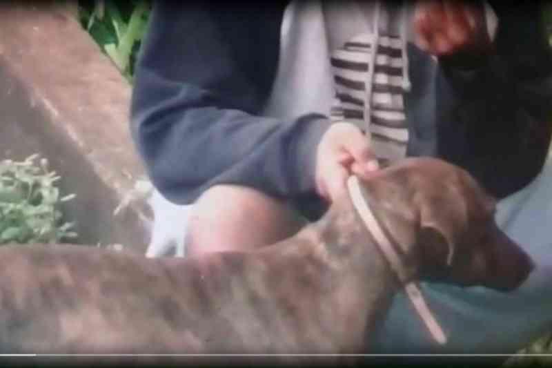 Em vídeo, homem é flagrado obrigando cachorro a inalar fumaça de maconha