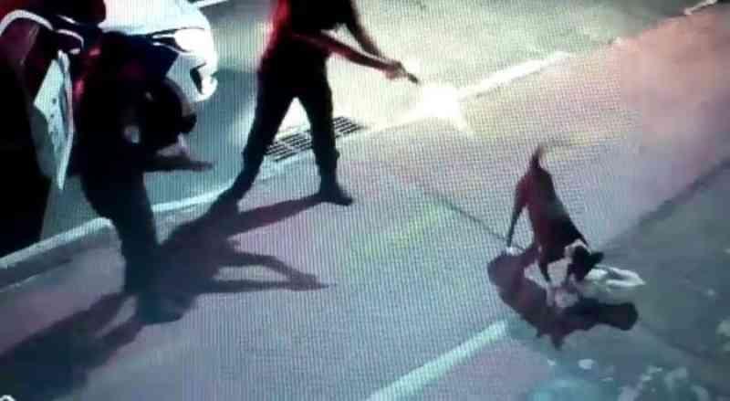 Guarda municipal atira em cachorro e revolta tutores do animal em Vila Velha, ES