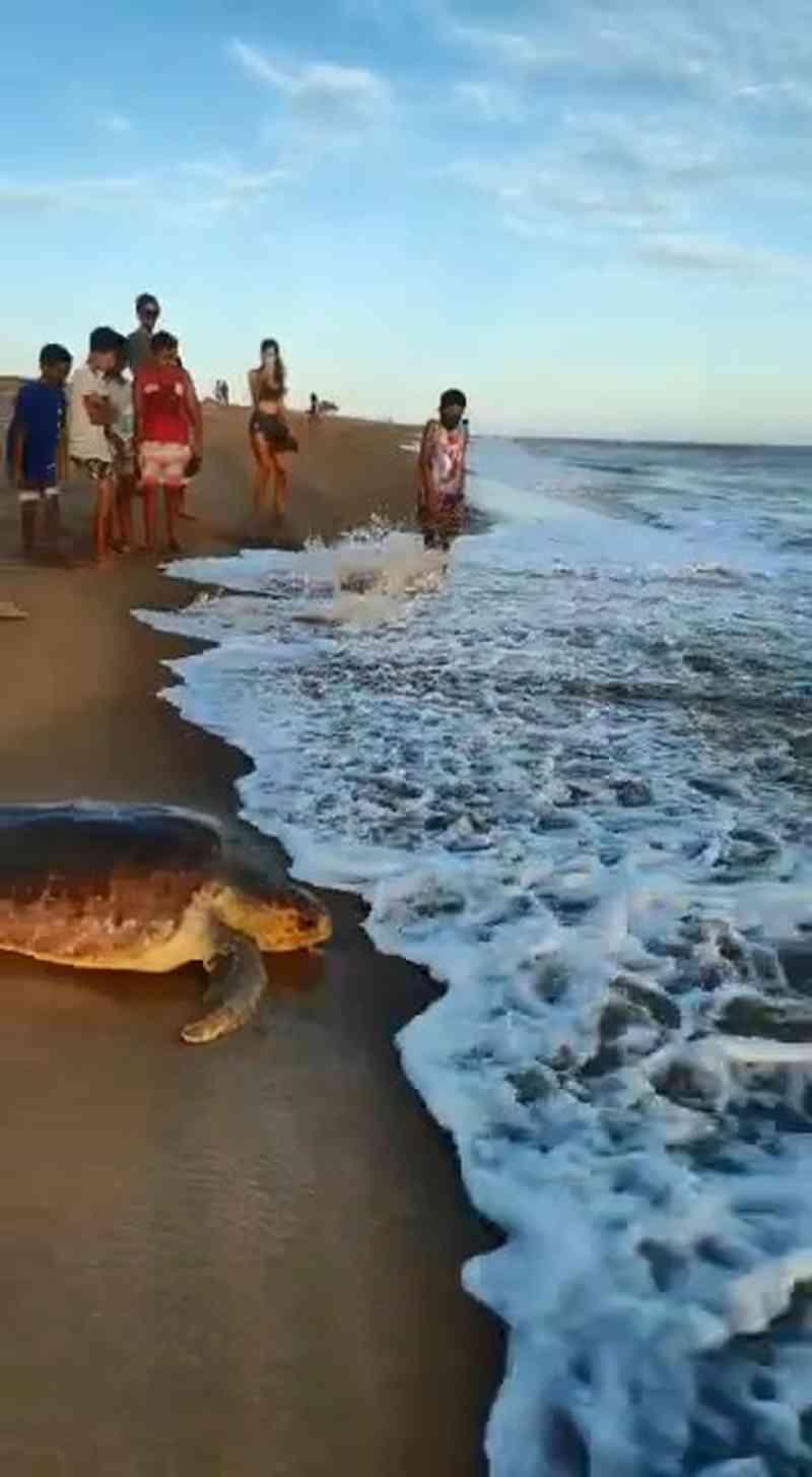 Tartaruga reabilitada é solta no litoral do ES