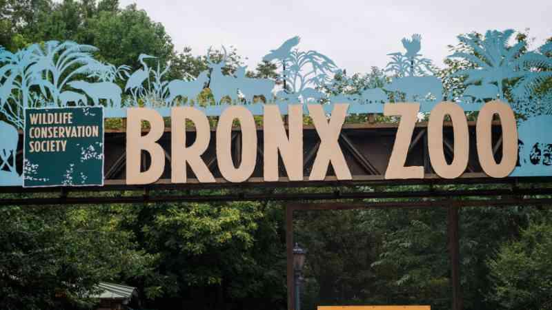 Tribunal de apelação mantém decisão que não reconhece como pessoa a elefanta do zoológico do Bronx