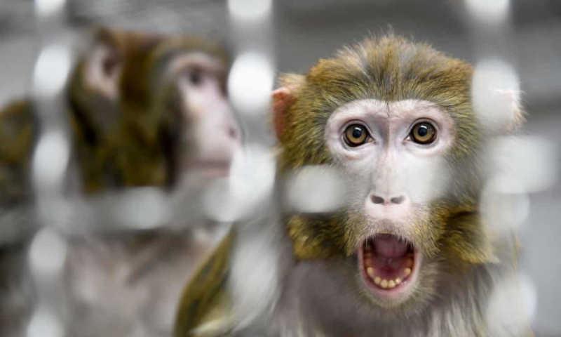 NASA abateu 27 macacos para experiências num único dia. Caso está a gerar revolta
